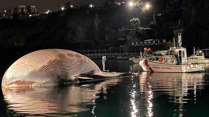 Italy: Huge dead whale found off Sorrento coast