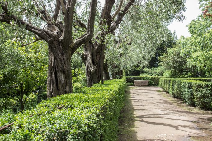 A taste of ancient Rome: organic olive oil from the Palatine Hill