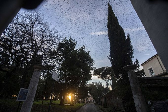 Rome park closed as starlings move in after New Year fireworks massacre