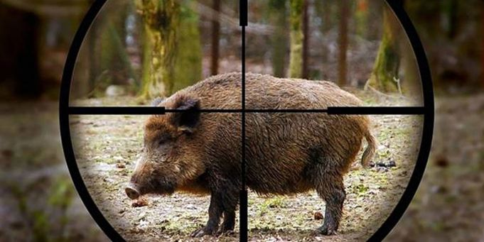 Wild boar trapped on Rome nature reserves sold alive at auction