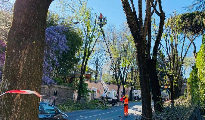 Rome environmental groups slam tree pruning in nesting season