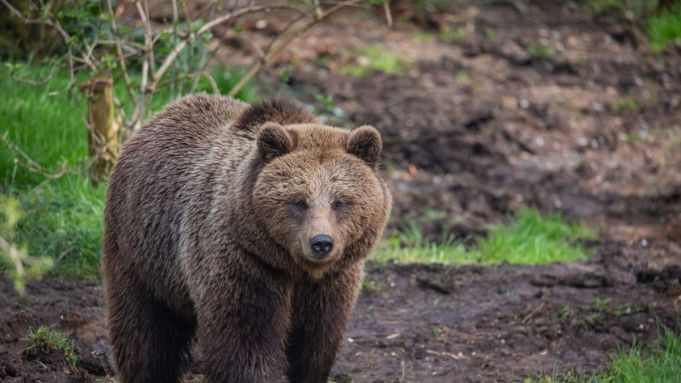 2 UK bears killed after escape from enclosure