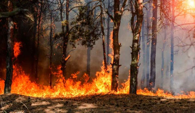 Sardinia wildfires force hundreds of evacuations