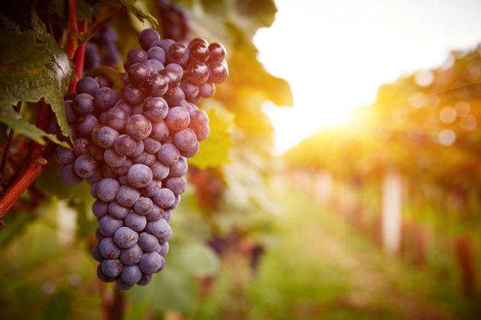 Rome revives ancient Vinalia wine harvest festival in Botanic Gardens