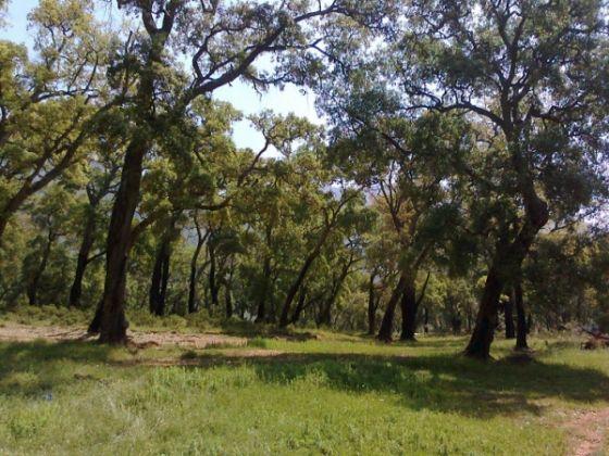 Fondi's sleepy valley - image 1