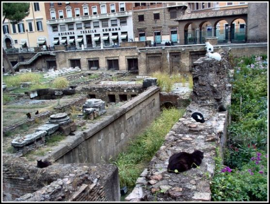 Rome cat sanctuary gets eviction order - image 3