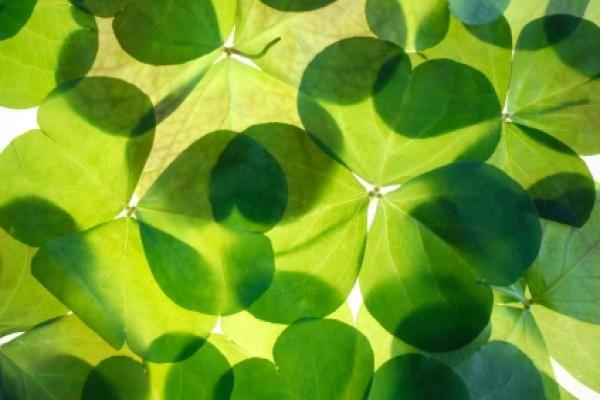 St Patrick's Day in Rome - image 2
