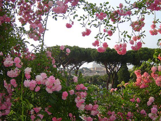 Rome's rose garden - image 1