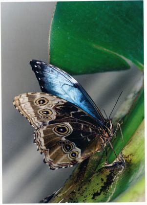 Butterflies & Co. - image 4