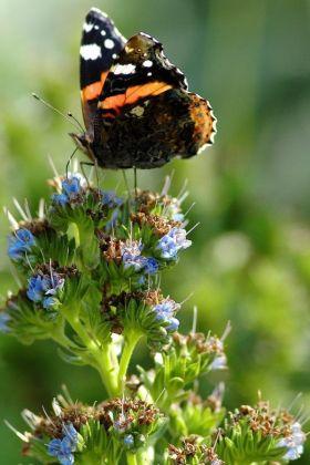 Butterflies & Co. - image 2