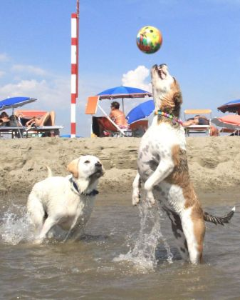 Rome's dog-friendly beach reopens - image 2