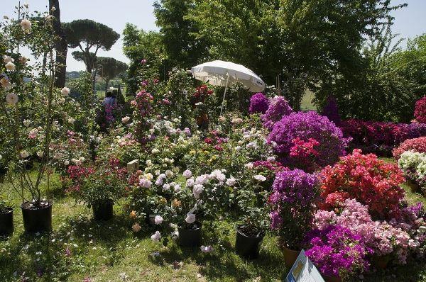 Floracult - image 3
