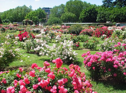 Rome's rose garden - image 3
