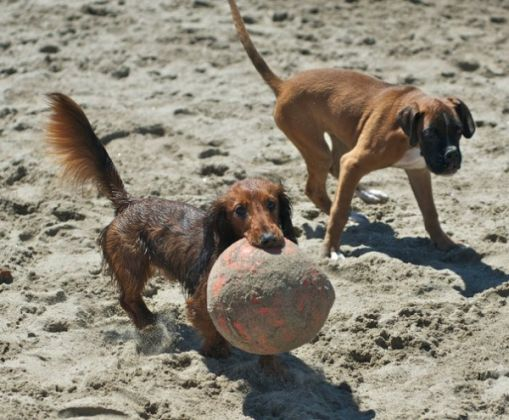 Rome's dog-friendly beach reopens - image 4