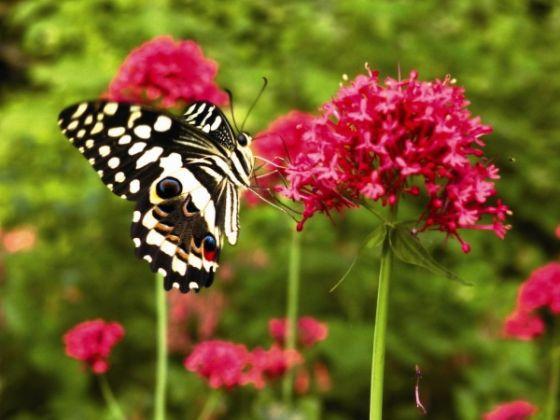 Butterflies & Co. - image 1
