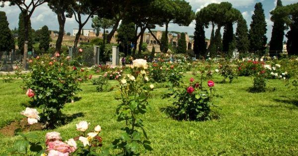 Rome's rose garden - image 4