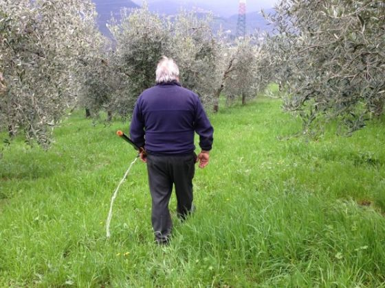 Italy Food Roots - image 4