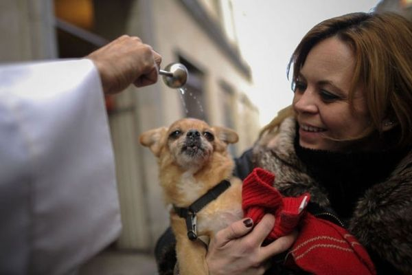 Blessing of the animals in St Peter's Square - image 2