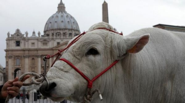 Blessing of the animals in St Peter's Square - image 1