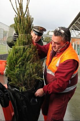 Rome recycles Christmas trees - image 1
