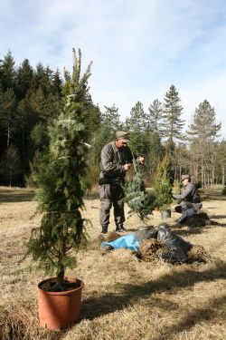 Rome recycles Christmas trees - image 2