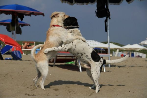 Rome's dog-friendly beach reopens - image 3