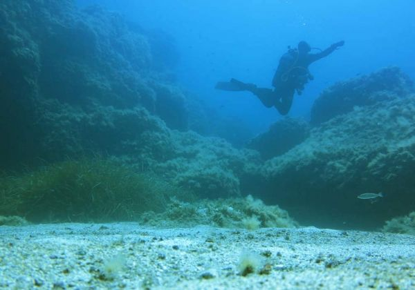 Diving - image 2