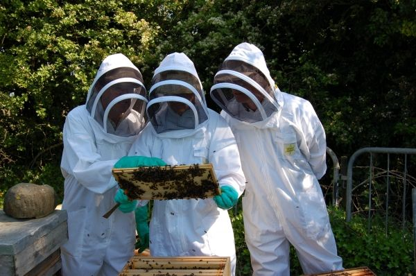 Bees for British Expo 2015 - image 2