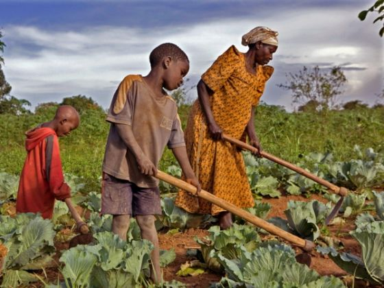 FAO reports progress in eradicating hunger - image 2