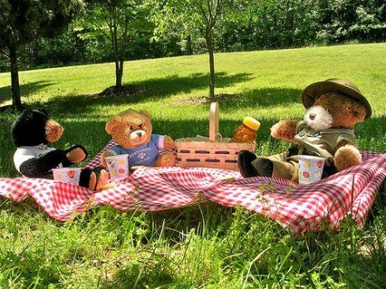 Irish Club of Rome picnic - image 2