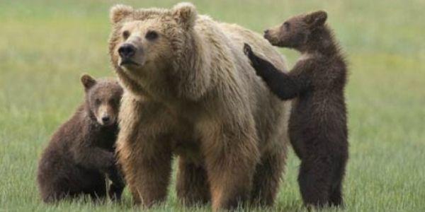 Rome mural dedicated to Daniza the bear - image 4