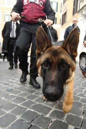 Guard dogs at Rome's busiest metro stations - image 2