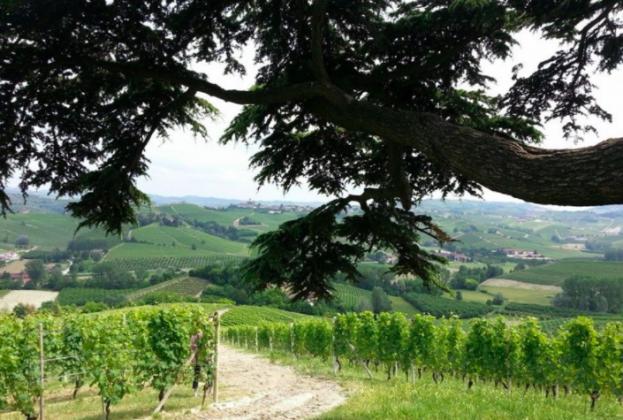 Wine lessons with Riserva Grande - image 2