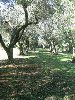 Rent prestigious villa Cassia Grottarossa - image 12