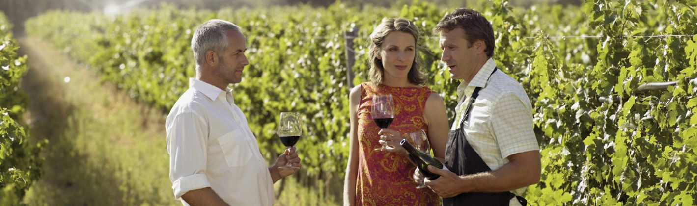 Wine Tasting, vineyard tour and lunch in Frascati - image 1