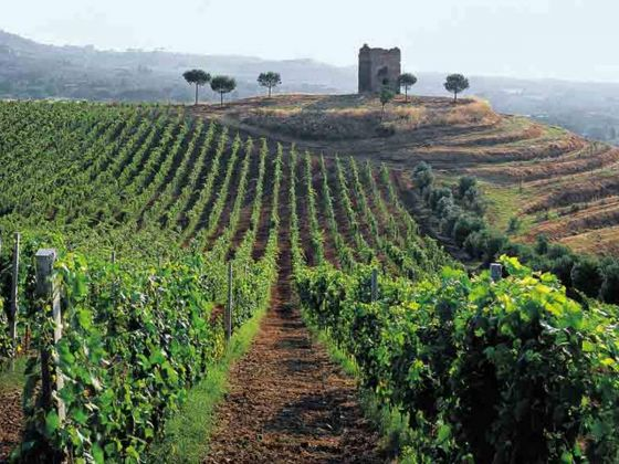 Wine Tasting, vineyard tour and lunch in Frascati - image 4