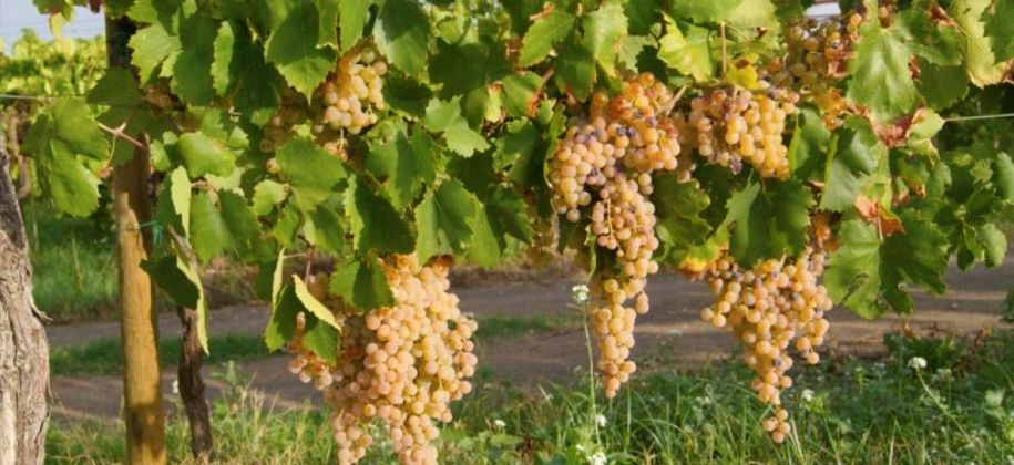 Wine Tasting, vineyard tour and lunch in Frascati - image 3
