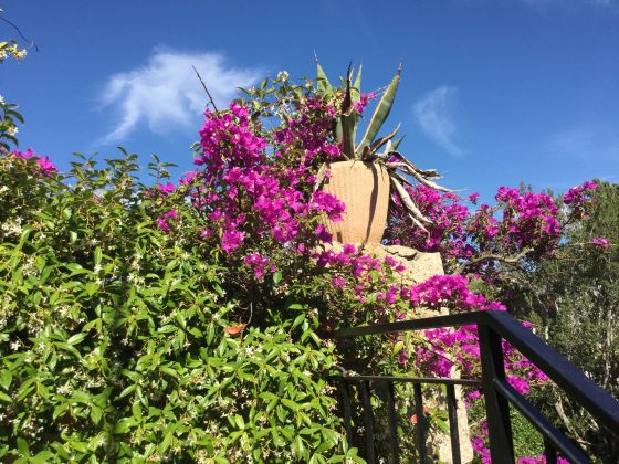JUNE AND JULY IN SARDINIA VILLA.  STAY IN  DETACHED HAUSE IN EXCHANGE FOR 3 HOURS OF ENGLISH LESSON - image 4