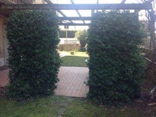 100 sq m semi furnished ground floor flat with 400 sq m garden. Prima Porta - comune di Roma. 3 bedroom, 2 bathroom, - image 4