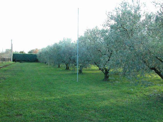 Zagarolo - Charming bi-level villa for sale - image 8
