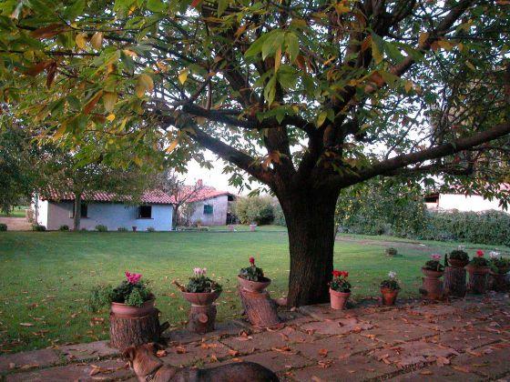 Zagarolo - Charming bi-level villa for sale - image 7