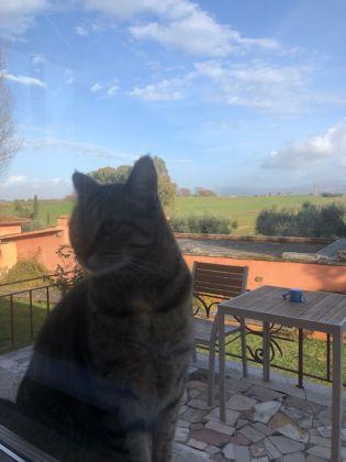 Villa in private ranch Laurentina/Divino Amore - image 3