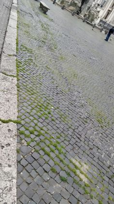 Rome: Grass grows in deserted Piazza Navona - image 10