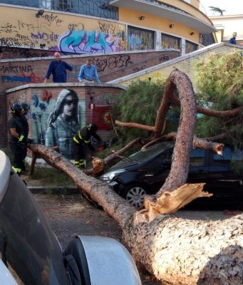 Huge pine tree falls in Garbatella area of Rome