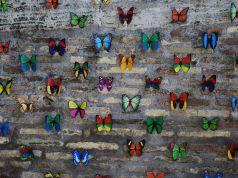 Butterflies on Tiber Island