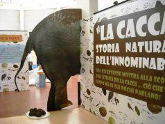 La cacca: storia naturale dell'innominabile