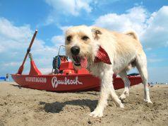 Rome's dog-friendly beach open for summer season