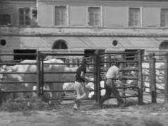 Rome in 1949 - Domenica d'agosto