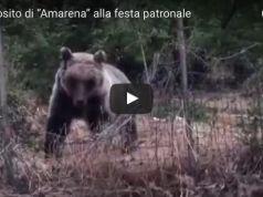 Wild Bear in Abruzzo