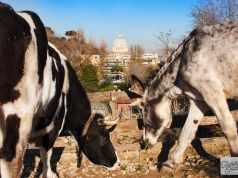 La Fattorietta: Rome's farm for kids